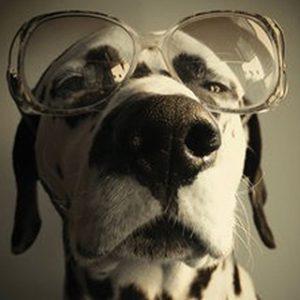 En internet nadie sabe que eres un perro