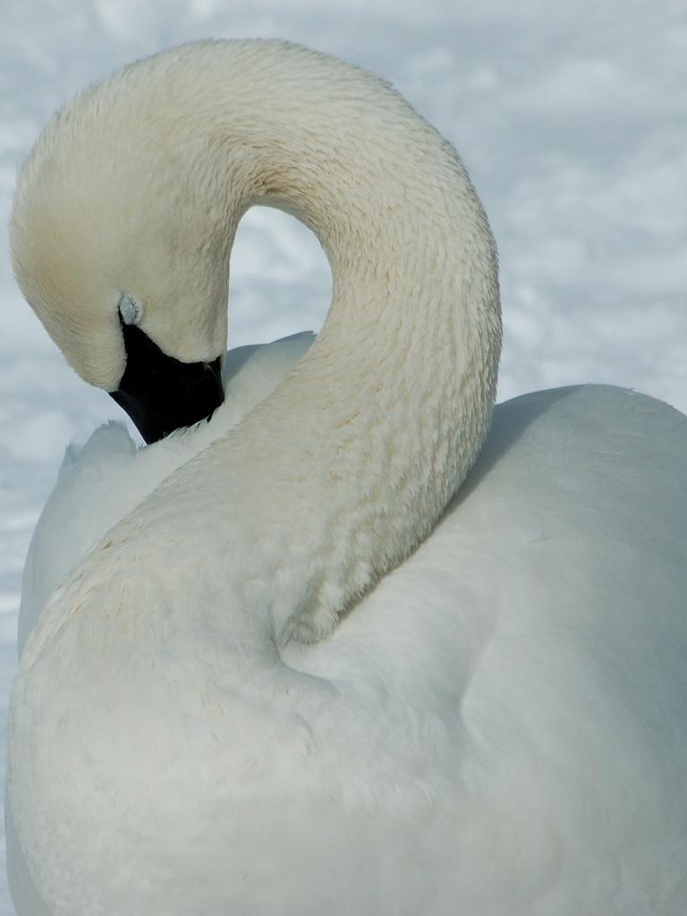 El Color: Blanco