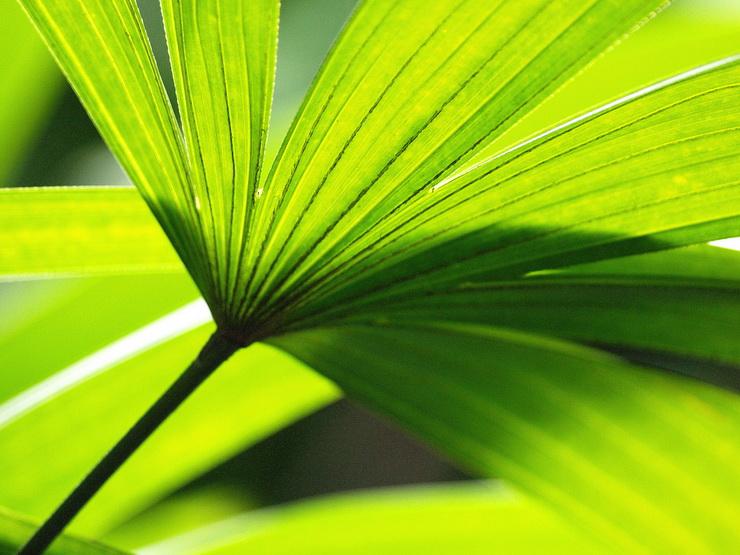 color_psicologia_verde