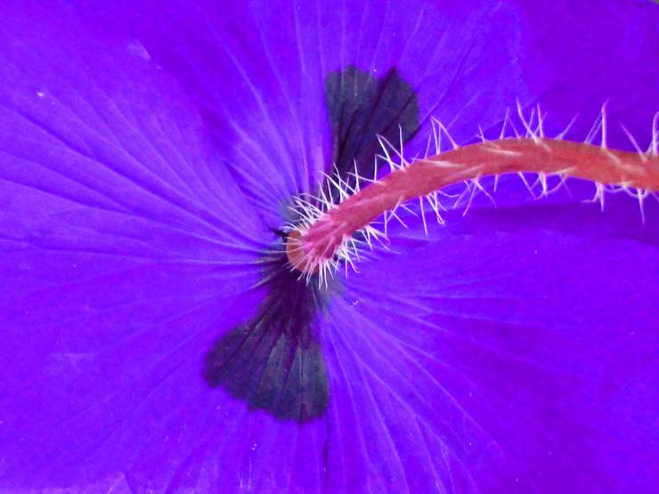 El Color: Violeta